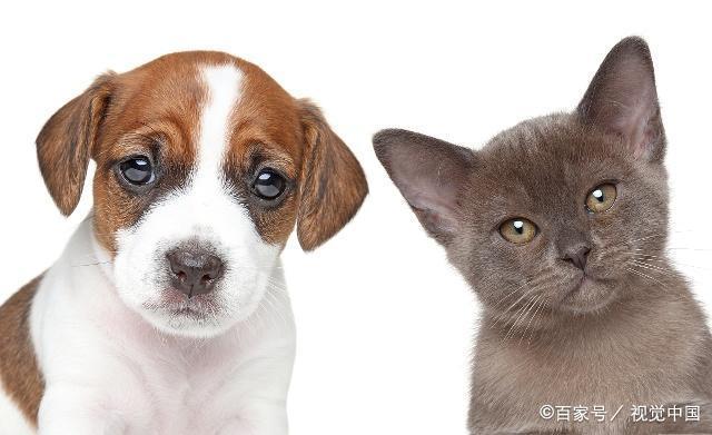 宠物饲养中存在的问题,有哪些应对措施?了解一下吧!