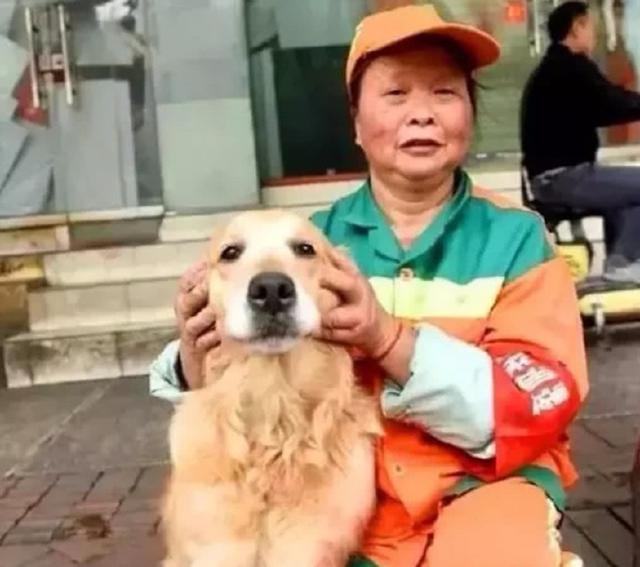 金毛流浪狗露宿街头,被环卫阿姨收养