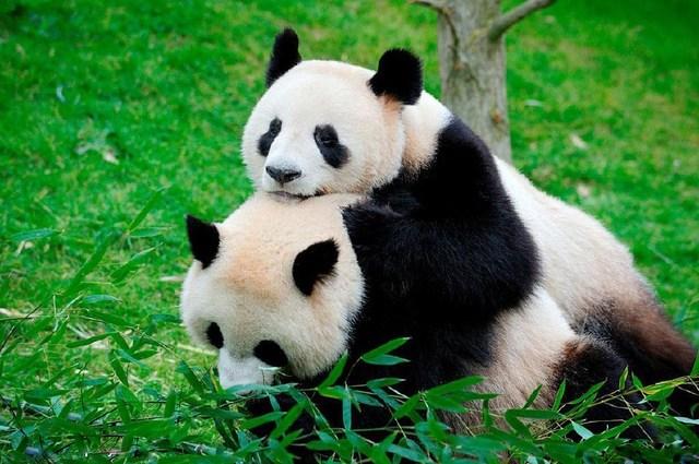 喜欢动物的一定要看这几个有趣的动物小知识