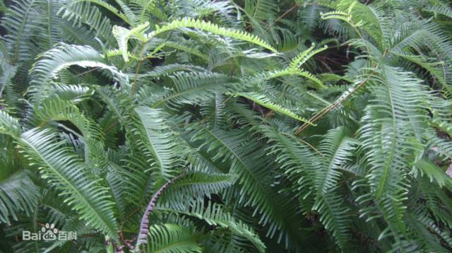 湖北特产植物图片