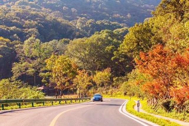 公路生态系统,同时减轻噪音污染和生产可再生能源