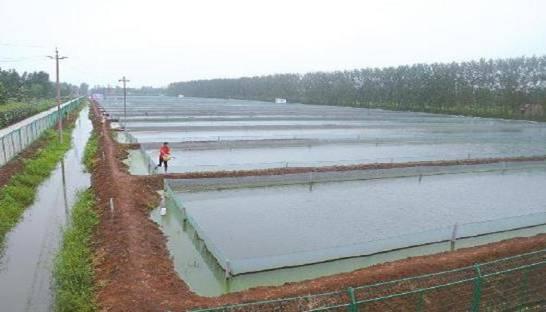 返乡农民看上泥鳅,养殖泥鳅走上致富之路