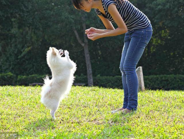给狗狗训练时,6大禁忌不能犯,谨记!