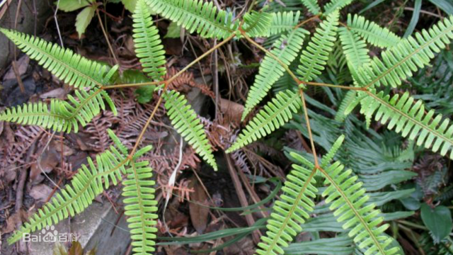 湖南特产植物图片