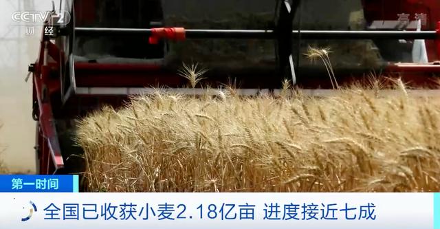 農業農村部:全國已收獲小麥2.18億畝,進度接近七成