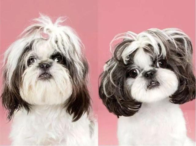 宠物整容和虐狗没什么区别,选择它就别伤害它