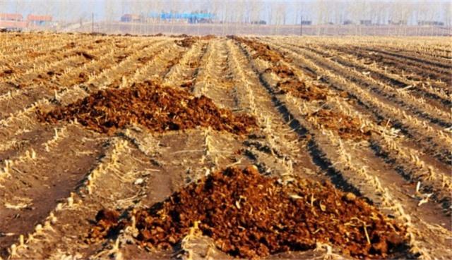 月季露地栽培:从4个方面改善土壤