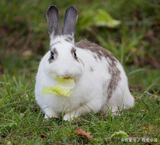 """生肖兔,""""横财""""由天而降!就在明日酉时!接了整年笑口常开! 第1张"""