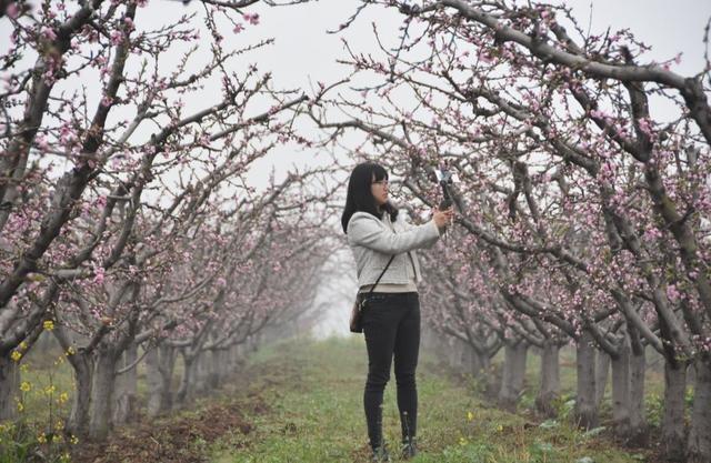 鄠邑區蔣村街道柳泉口第三屆桃花節將於3月20日啟幕