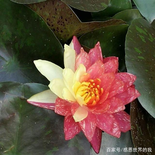 中国四大名花图,真的太美了,看完了我也要回家