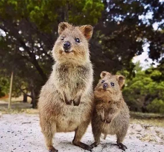 這20個世界罕見物種,為何沒有列進國家保護區?