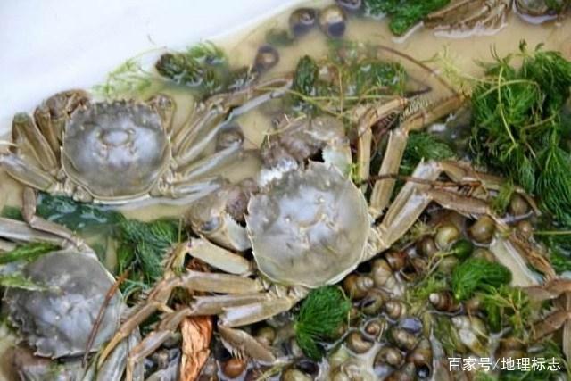走遍中国发现地标:微山湖大闸蟹、微山湖四鼻鲤鱼、微山湖乌鳢