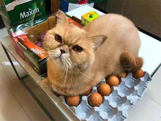 「ripndip中国官网怎么买」贱猫