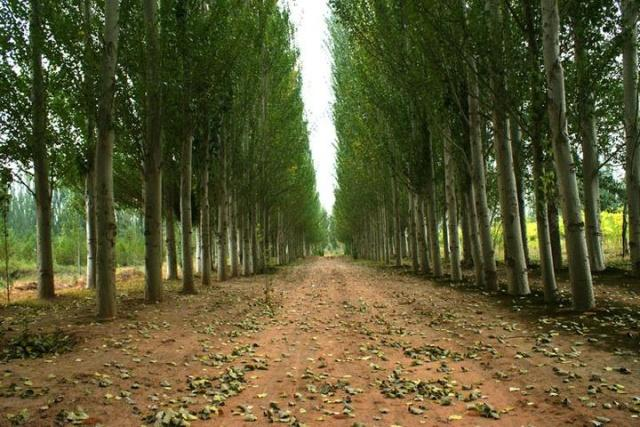 发酵树皮种盆栽疏松又肥沃,书皮的沤制方法