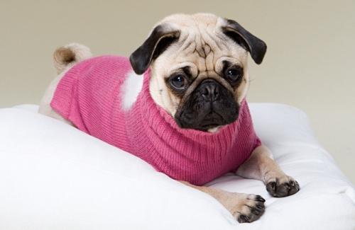 狗狗感冒一般几天能好,狗狗感冒了几天可以好