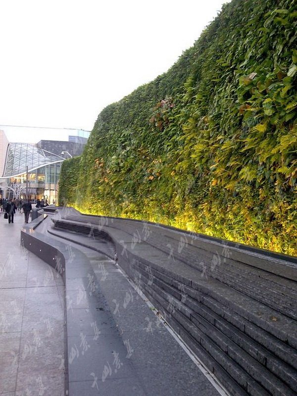 室外活体绿植墙在施工技术上植物选择有技巧