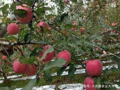 果树生长必需的17种营养元素及其作用