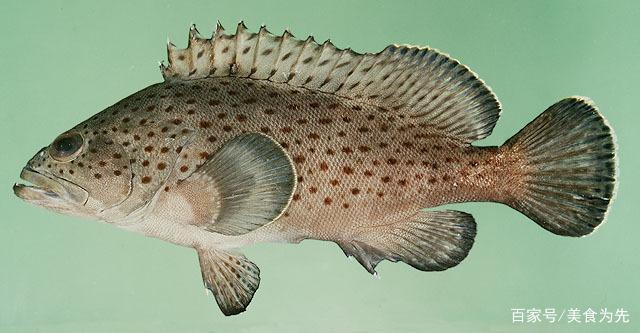 减肥食谱:吃鱼可以减肥,以下6种鱼的做法值得收藏