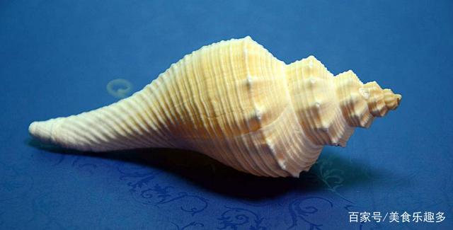 海螺的美味吃法你知道是什么嗎?我就只有吃過一次(圖2)