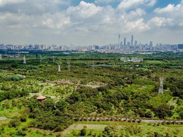 广州举行海珠湿地徒步大会 走读自然 无痕徒步