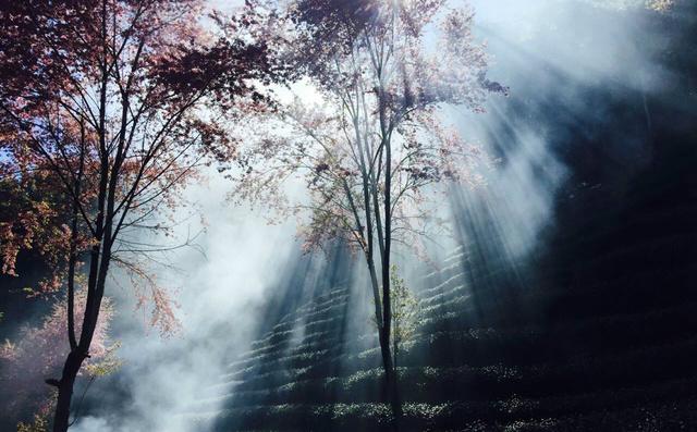 风景图集:无量山上看冬日樱花