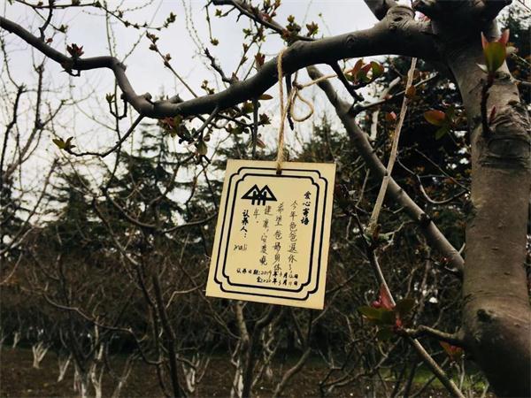 关注环保_大爱无疆――超爱财爱心树木认养活动圆满落幕