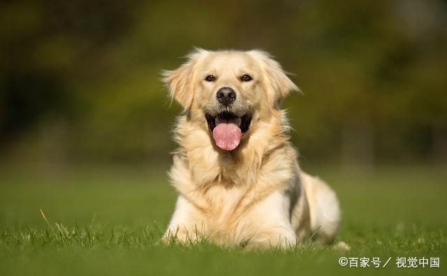 """生肖狗,12月要留心一个人,因为他可能会是你的命中""""贵人""""! 第2张"""