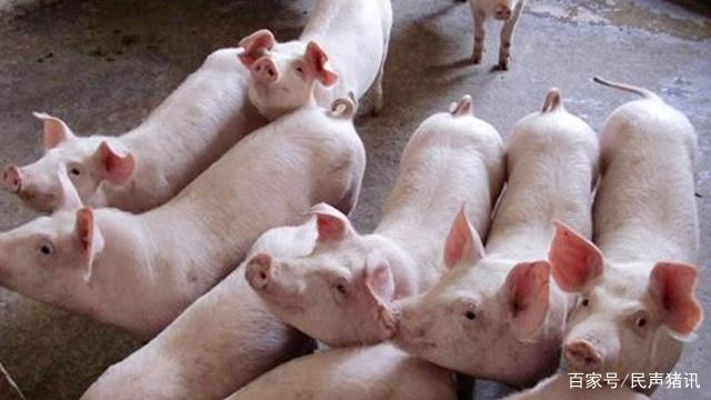 养猪业的可持续发展形势不容乐观,那么你是否知道有哪些方面呢?