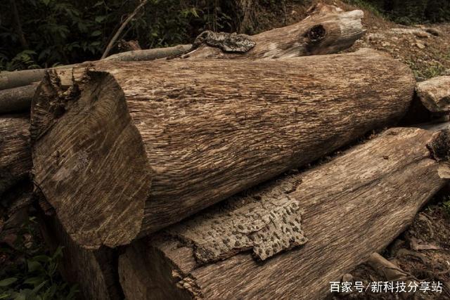 木桩遇上液压机,木桩太坚强了!看着都觉得扎嘴