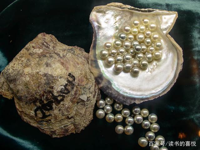 中国古代盛产珍珠,背后真相原来如此