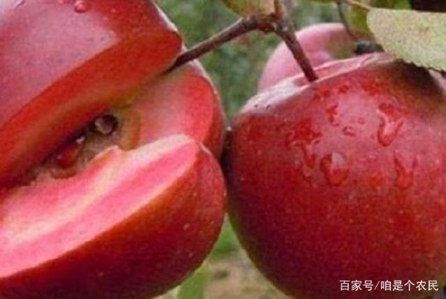 辽宁省清原县英额门康宁苗圃