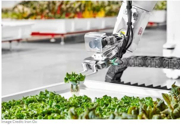 美国首个全自动化室内农场投入生产产量为传统种植的30多倍