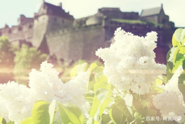 適宣栽培花卉的地方,網友:驚呆了!