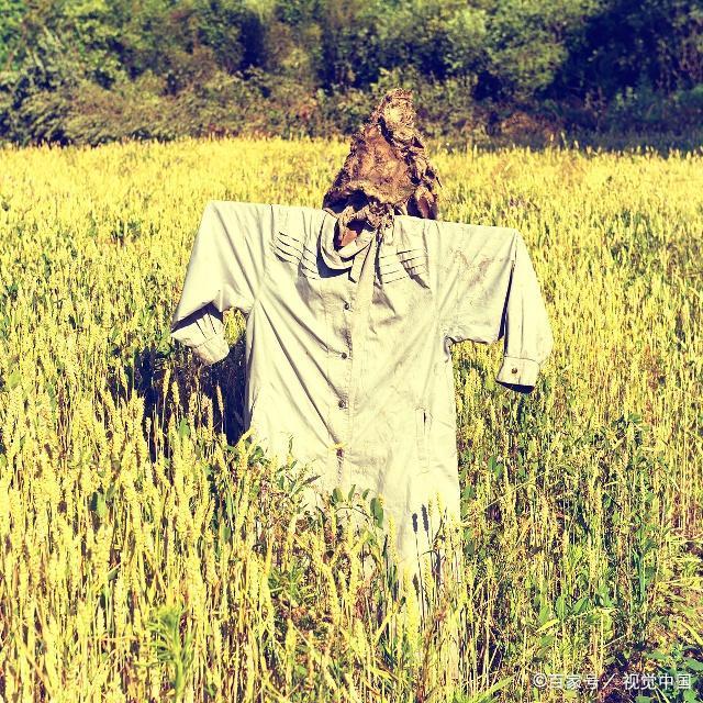 造型各异的稻草人是农村一道特色风景线