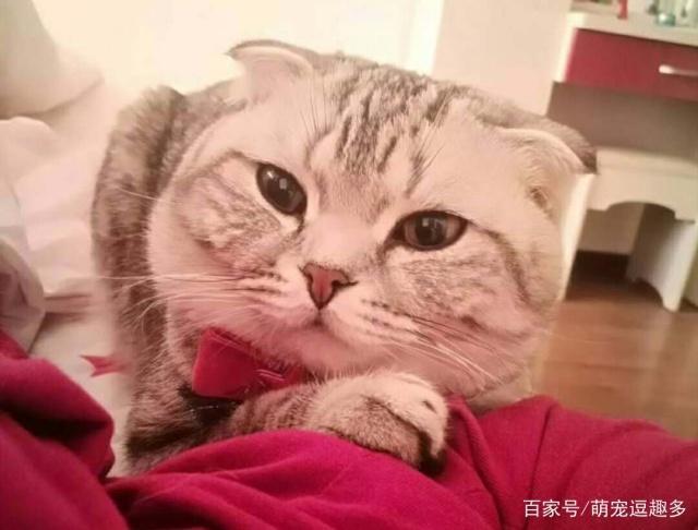 谁不想有一只圆乎乎的大脸猫?想要喵主子发腮,主人要注意3点!