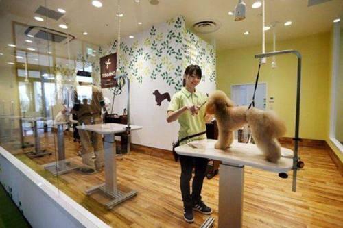 美国打击不人道繁殖,宠物店只能出售救助动物
